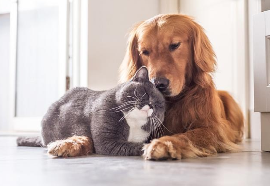 How to Clean Differently if You Have Pets in Your Home