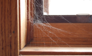 TOP COMMON HIDING SPOTS TO FIND COBWEBS AND HOW TO ELIMINATE THEM